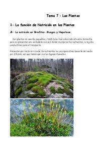 Tema 7 : Las Plantas