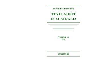 TEXEL SHEEP IN AUSTRALIA