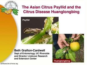 The Asian Citrus Psyllid and the Citrus Disease Huanglongbing