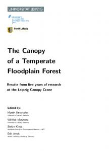 The Canopy of a Temperate Floodplain Forest
