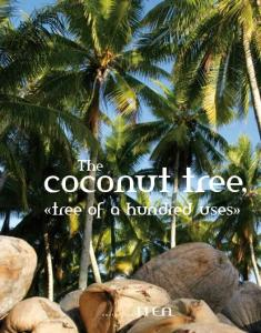 The. coconut tree, «tree of a hundred uses»