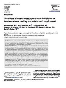The effect of matrix metalloproteinase inhibition on tendon-to-bone healing in a rotator cuff repair model