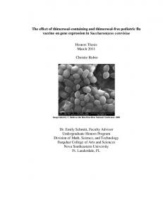 The effect of thimerosal-containing and thimerosal-free pediatric flu vaccine on gene expression in Saccharomyces cerevisiae. Honors Thesis March 2011
