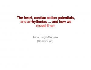 The heart, cardiac action potentials, and arrhythmias and how we model them