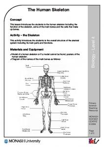 The Human Skeleton. Concept. Activity the Skeleton. Materials and Equipment