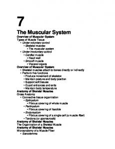 The Muscular System Overview of Muscular System Overview of Muscular System Anatomy of Skeletal Muscles