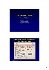 The PI3-Kinase Pathway