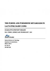 THE PURINE AND PYRIMIDINE METABOLISM IN LACTATING DAIRY COWS