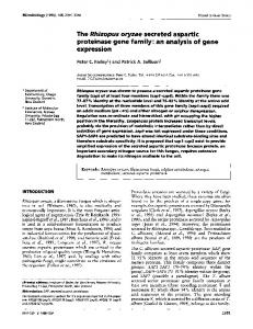 The Rhizopus oryzae secreted aspartic proteinase gene family: an analysis of gene expression