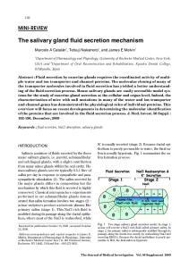 The salivary gland fluid secretion mechanism