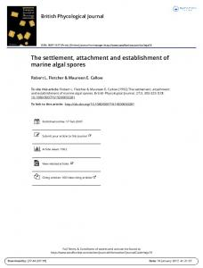 The settlement, attachment and establishment of marine algal spores