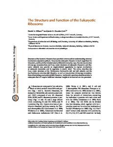 The Structure and Function of the Eukaryotic Ribosome. Correspondence: and