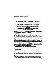 The vomeronasal organ in Angora goats (Capra hircus)