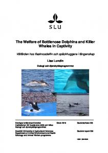 The Welfare of Bottlenose Dolphins and Killer Whales in Captivity