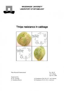 Thrips resistance in cabbage