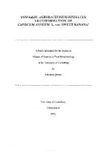 TOWARDS AGROBACTERIUM-MEDIATED TRANSFORMATION OF CAPSICUM ANNUUM L. var.. 'SWEET BANANA'