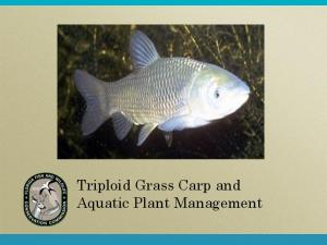 Triploid Grass Carp and Aquatic Plant Management
