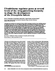 Ultrabithorax regulates genes at several levels of the wing-patterning hierarchy to shape the development of the Drosophila haltere
