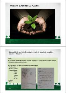 UNIDAD 7: EL REINO DE LAS PLANTAS