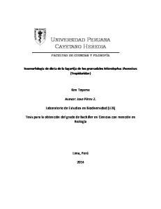 UNIVERSIDAD PERUANA CAYETANO HEREDIA