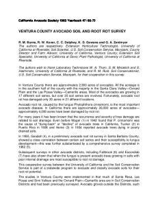 VENTURA COUNTY AVOCADO SOIL AND ROOT ROT SURVEY
