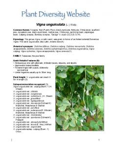 Vigna unguiculata (L.) Walp
