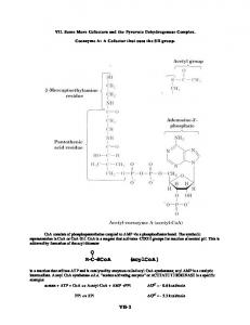 VII. Some More Cofactors and the Pyruvate Dehydrogenase Complex. Coenzyme A: A Cofactor that uses the SH group