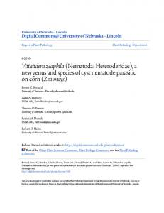 Vittatidera zeaphila (Nematoda: Heteroderidae), a new genus and species of cyst nematode parasitic on corn (Zea mays)
