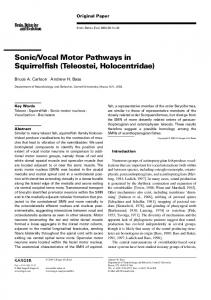 Vocal Motor Pathways in Squirrelfish (Teleostei, Holocentridae)
