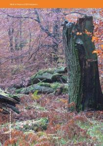 Wald im Natura-2000-Netzwerk