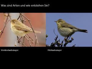 Was sind Arten und wie entstehen Sie?