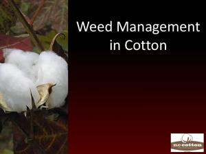 Weed Management in Cotton