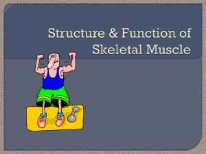 What do you already know about muscles? Where do they attach? What do they do?
