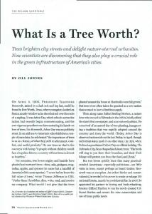 What Is a Tree Worth?