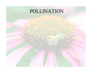 What is pollination? Pollination: The transfer of pollen from the male anther to the female stigma