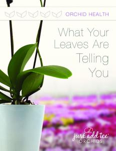 What Your Leaves Are Telling You