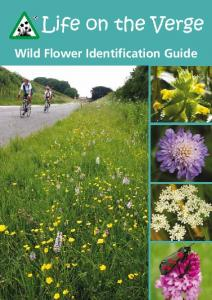 Wild Flower Identification Guide