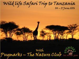 Wild life Safari Trip to Tanzania