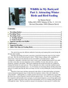 Wildlife in My Backyard Part 1: Attracting Winter Birds and Bird Feeding