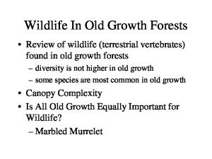 Wildlife In Old Growth Forests