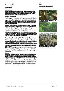 Willd. Fabaceae - Mimosoideae. Acacia mangium. brown salwood