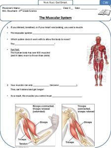 Work Hard. Get Smart. Physician s Name: Class: 8 Date: Mrs. Bouchard 8 th Grade Science. The Muscular System