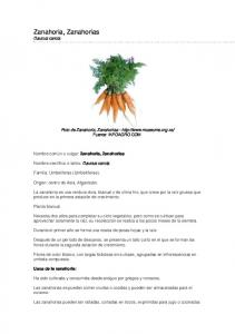 Zanahoria, Zanahorias Daucus carota